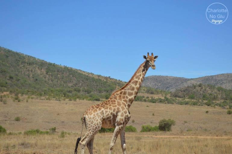 charlottenoglu_afriquedusud_southafrica_5