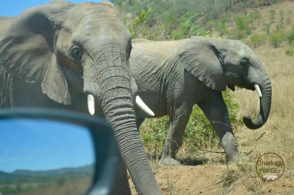 charlottenoglu_afriquedusud_southafrica_7
