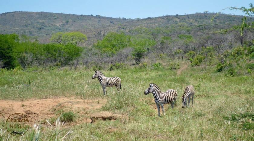 charlottenoglu_afriquedusud_southafrica_8