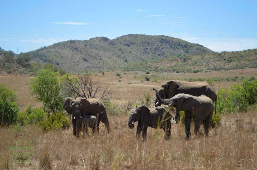 charlottenoglu_voyage_safari_afriquedusud_southafrica