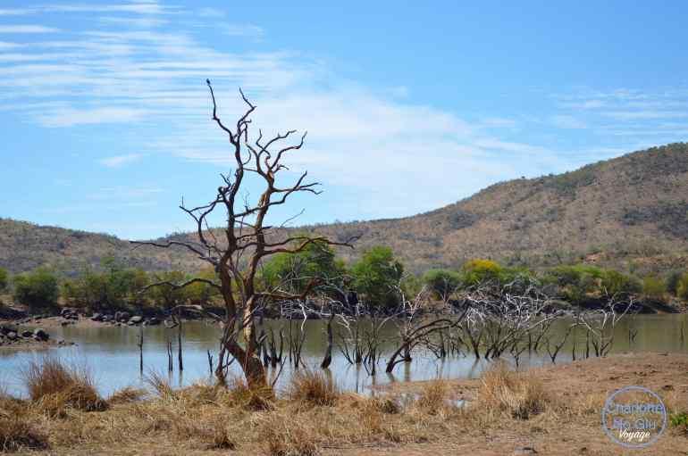 charlottenoglu_voyage_travel_southafrica_afriquedusud_safari